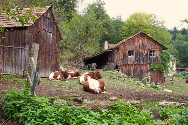 Ferienwohnung auf dem Biobauernhof Preise